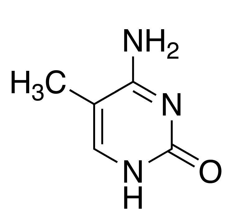 CpG Methylation