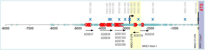 CpG Coverage of a Gene